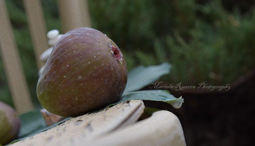"""""""Лятото смокиня си открадва"""" от Мариела Русева"""