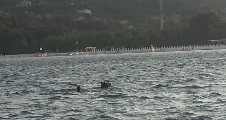 Кон плува между яхтите