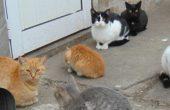 Квартална градинка, охранени котки и място за паркиране
