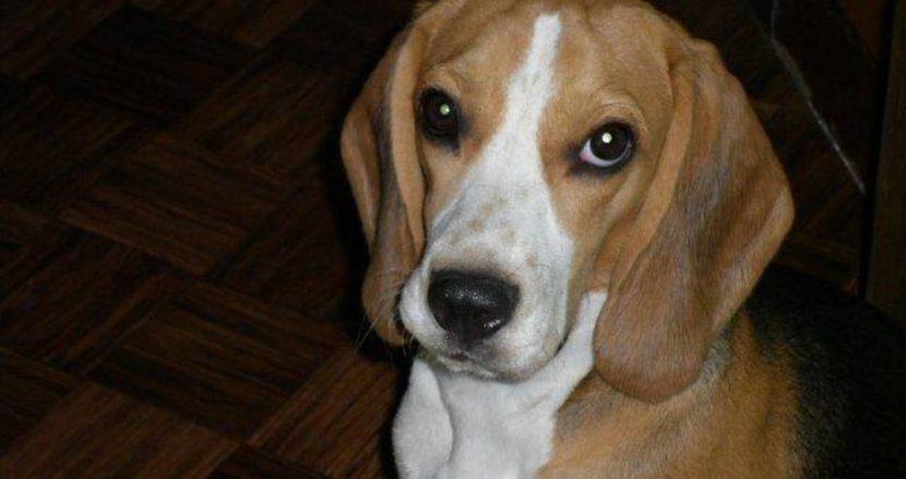 Това сладко кученце е изгубено в Цветния квартал
