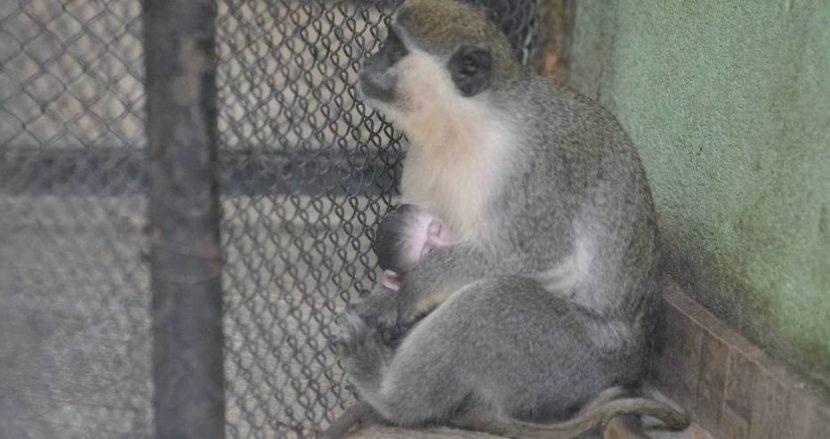 Най-младия обитател на Зоопарка във Варна