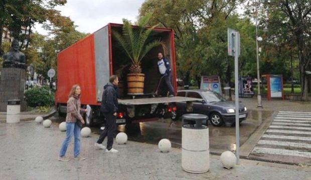 През ноември вдигат палмите от варненските улици