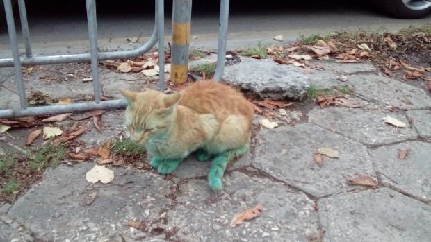 Дежавю: Позеленяло коте се разхожда из Варна