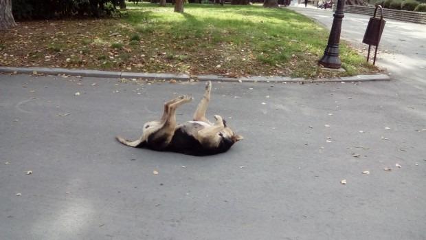 Убивали улични кучета във Варна с отрова за мишки и антифриз
