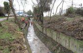 Обработват шахтите и деретата във Варна срещу гризачи