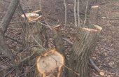 Горски екшън: Хванаха 7 каруци с крадени дърва за седмица! Във Варна написаха 4 акта за незаконна сеч