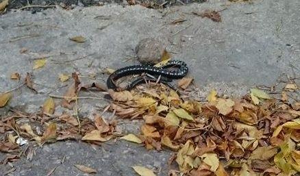 Мъртва змия стресира до централно училище