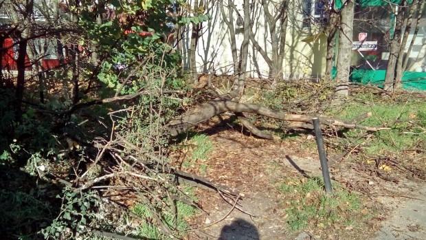 Бурният вятър стовари дърво върху необитаема къща