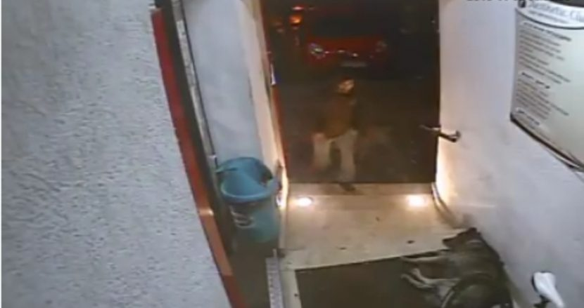 Сподели! да намерим крадеца (видео)