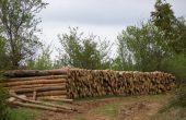 Горските задържаха автомобил и 1,9 куб. м незаконна дървесина