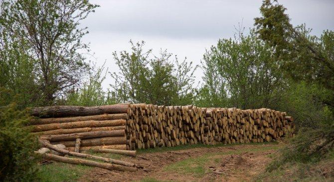 Варненските горски спипаха бракониери