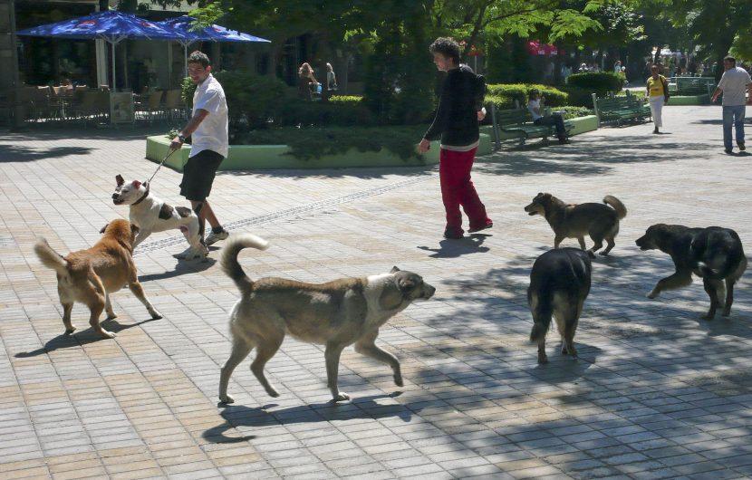 Природозащитник: Младите доброволци откриха престъпно деяние за боеве с кучета във Варна
