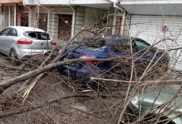 Разцепено дърво потроши коли и блокира улица във Варна (снимки)
