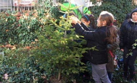 Благотворителна кампания за продажба на живи елхи започна във Варна