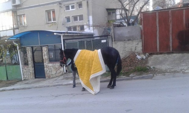 "Кон, покрит с юрган, се появи във ""Владиславово"""