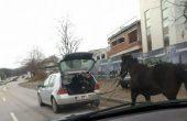 """Това не се вижда всеки ден! """"Каруцата"""" пред коня и газ по улиците на Варна"""