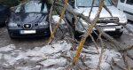 Дърво рухна върху две коли