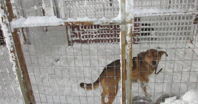 """Общината отвърна на удара от """"Енимъл Хоуп"""": Всички кучета в приюта в Каменар са нахранени, не бедстват!"""