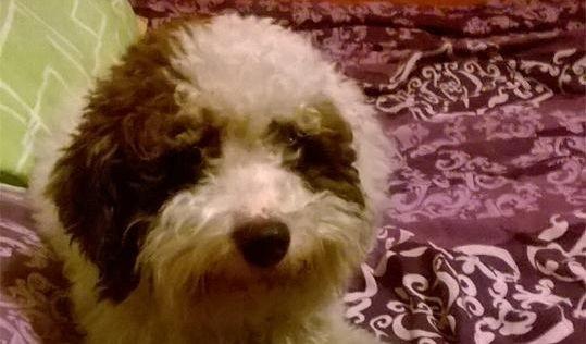 Читателка: изгубено куче в района на с. Звездица