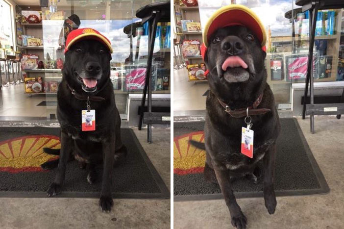 Изоставено куче започна работа на бензиностанция