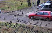 Граждани на Варна пропищяха от косери (снимки)