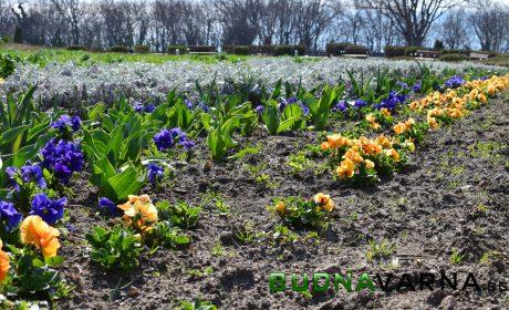 Еко скаути спасяват дървета и засаждат цветя във Варна, търсят съмишленици