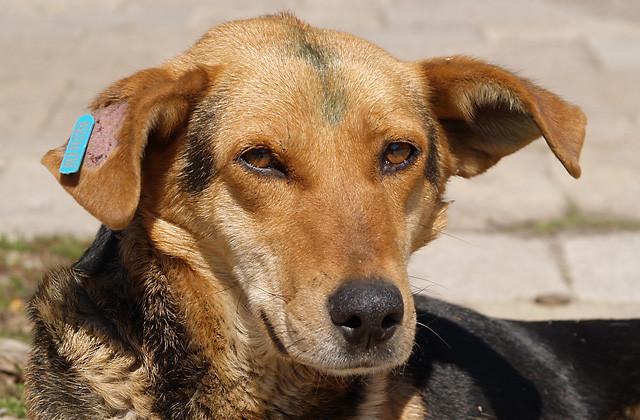 Бездомните животни във Варна миналата година били 2638