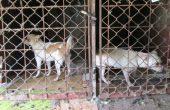 Ужасът край Варна! Рязали ушите на кучета с клещи без упойка