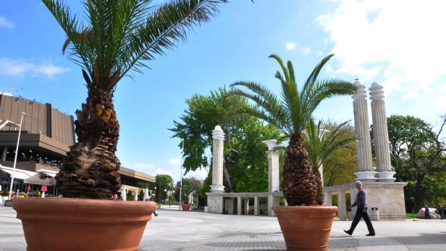 Поставят пак палмите и цветарниците в центъра