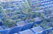 Фен на Спартак Варна: Стадионът прилича на ботаническа градина