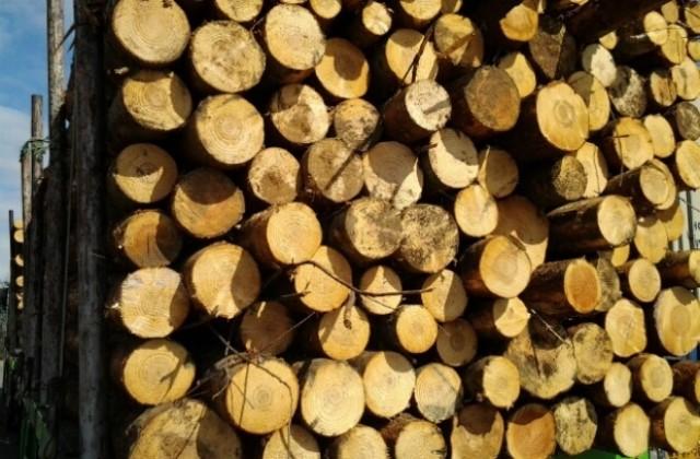"""Хванаха на място крадец на дървесина, сякъл в гората край """"Владиславово"""""""