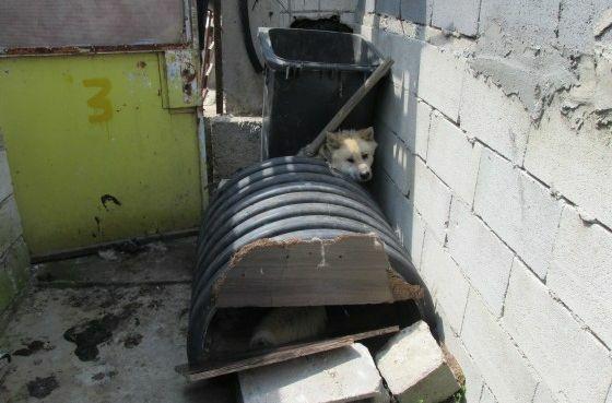 Кучетата от адския приют за първи път видяха слънце, чист въздух и човешко отношение