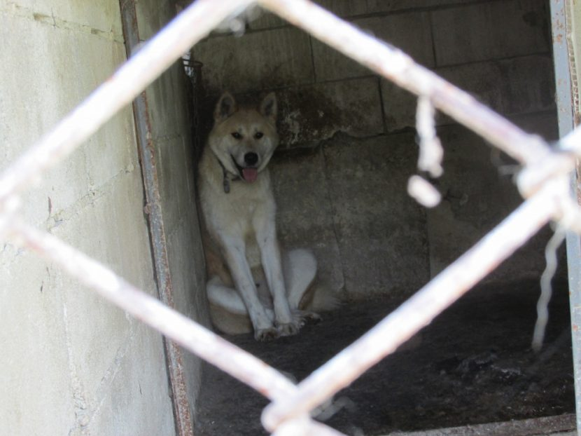 Неправителствена организация пое кучетата от приюта в село Каменар