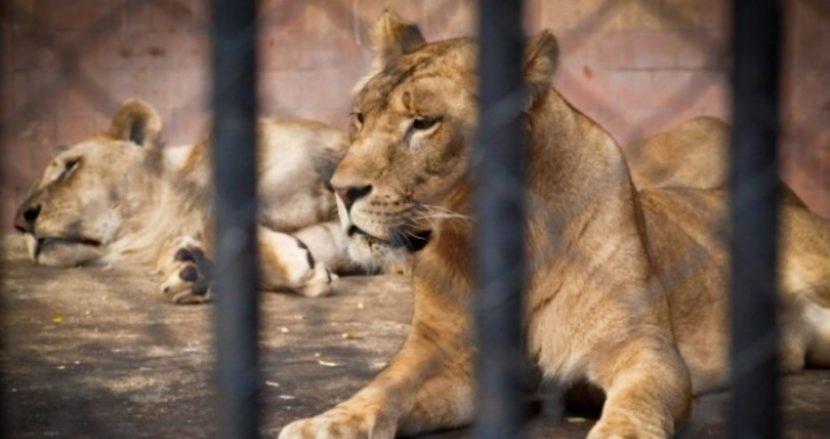 Варненският зоопарк очаква голям празник в неделя