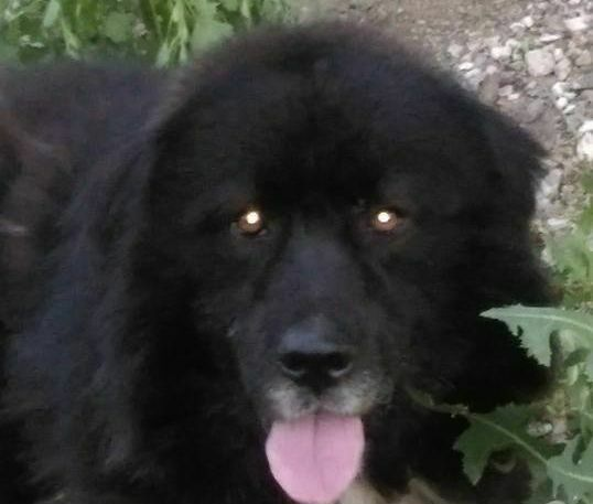 """Търси се стопанинът на куче, намерено в квартал """"Девня – 1"""""""