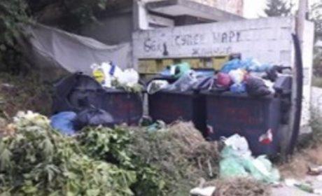 Незаконно сметище се е образувало до гребната база във Варна