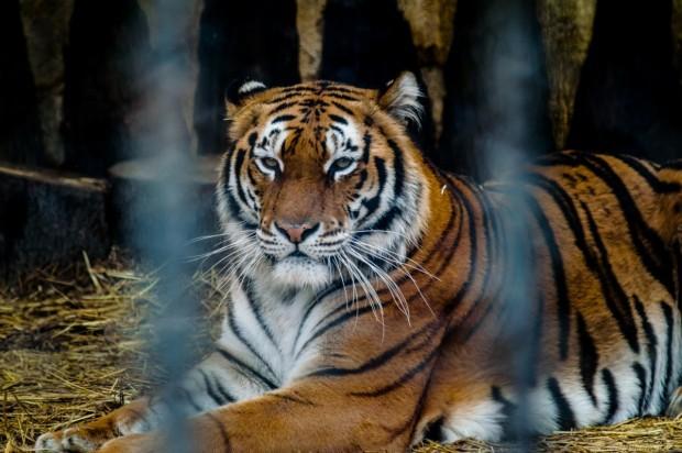 Охранители ще пазят животните в зоокъта от злосторници