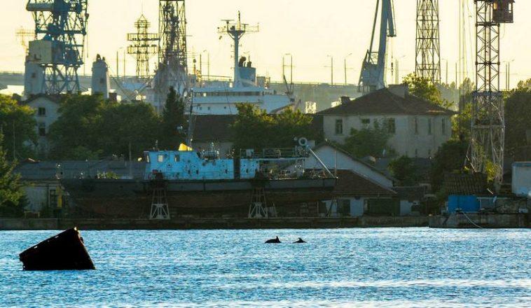 Дружелюбно морско семейство от години обитава варненския залив