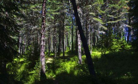 Изградиха още 4 км минерализовани ивици край гори във Варненско