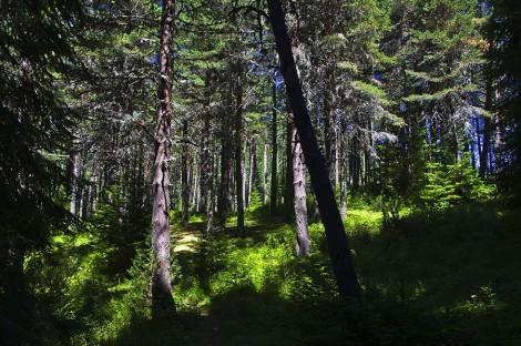 Пръчка в гората вместо таблет в ръката