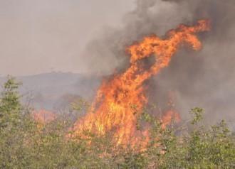3 пожара само за ден вдигнаха по тревога варненските горски стражари