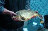 Ето защо няма прясна черноморска риба на голямата борса във Варна