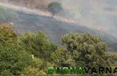 Изгоряха тревни площи в близост до супермаркет във Владиславово (снимки)