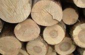 Каква ще бъде цената на дървата за огрев тази година?