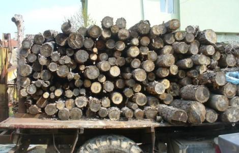Данъчните във Варна продават строителна дървесина