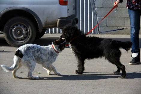 """Общинари тръгнаха """"на лов"""" за нарушители, глобиха варненка с 2 кучета"""