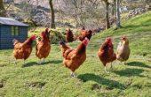 Птичи грип е установен близо до Варна