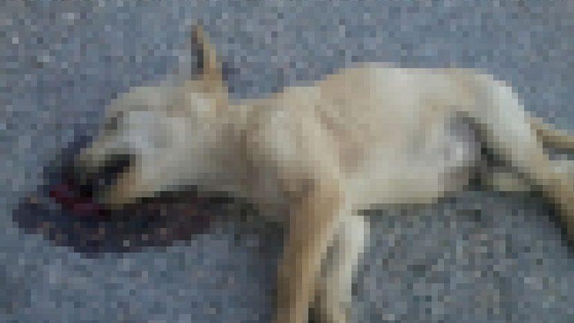 Варненка: Луд и агресивен урод изхвърля улични животни от шестия етаж