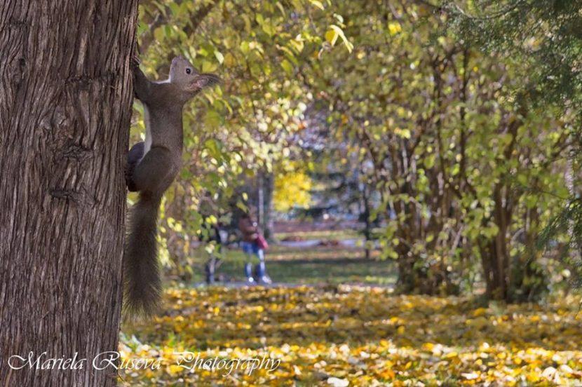 """""""Дали есента сътворява мечти"""" от Мариела Русева"""