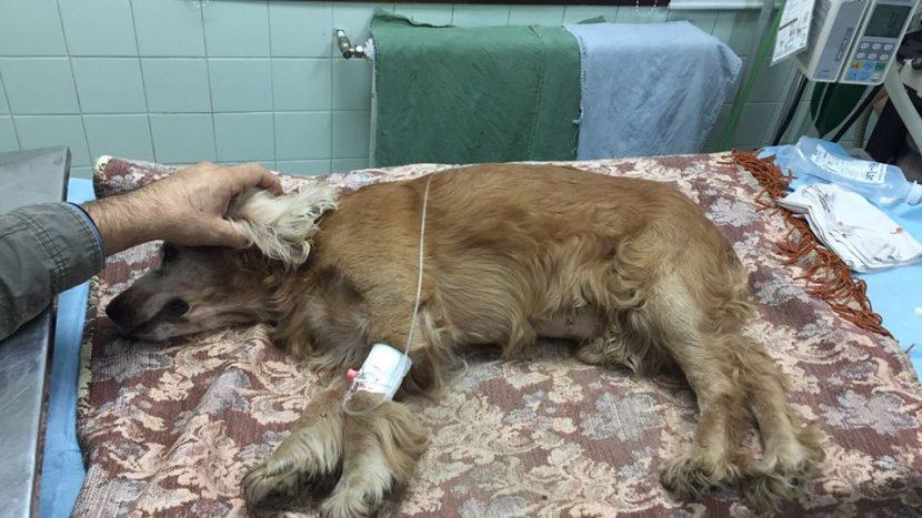 Куче е в критично състояние след ритане